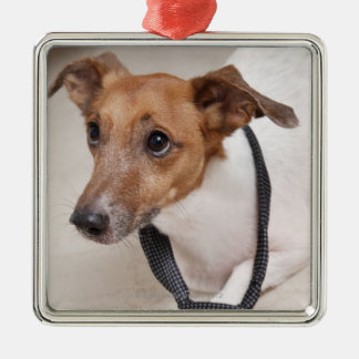 Close-up of a dog putting on a tie christmas ornament