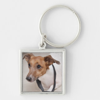 Close-up of a dog putting on a tie key ring