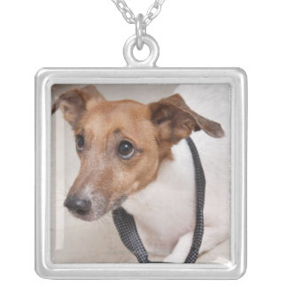 Close-up of a dog putting on a tie silver plated necklace