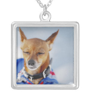 Close-up of a dog silver plated necklace