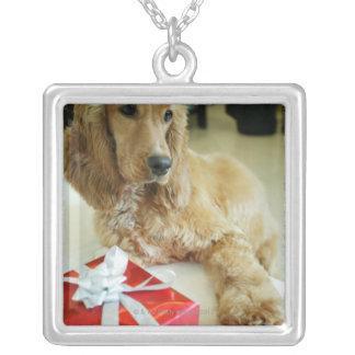 Close-up of a dog with a gift silver plated necklace