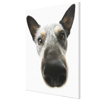 Close-up of a dog's head canvas print