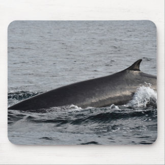 Close up of a Fin Whale Mouse Pad