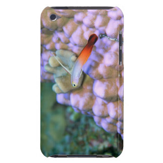 Close up of a fire dart fish, Okinawa, Japan iPod Touch Cases