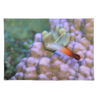 Close up of a fire dart fish, Okinawa, Japan Placemat