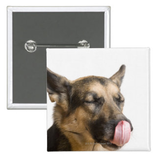 Close-up of a German Shepherd licking its nose 15 Cm Square Badge
