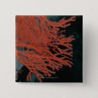 Close-up of a Gorgonian Sea Fan 15 Cm Square Badge