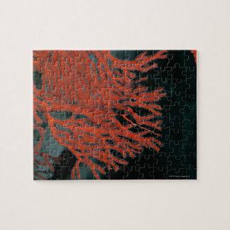 Close-up of a Gorgonian Sea Fan Jigsaw Puzzle