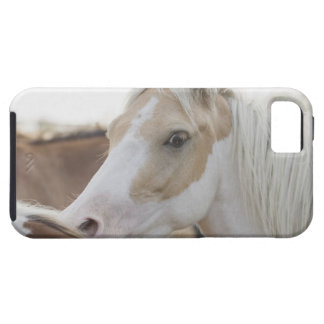 Close up of a herd of horses 2 iPhone 5 case