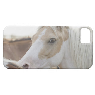 Close up of a herd of horses 2 iPhone 5 cover