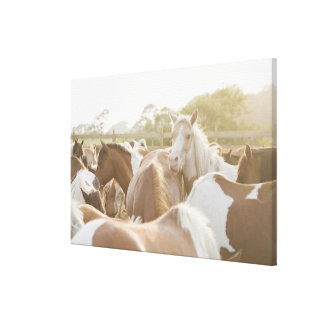 Close up of a herd of horses canvas print