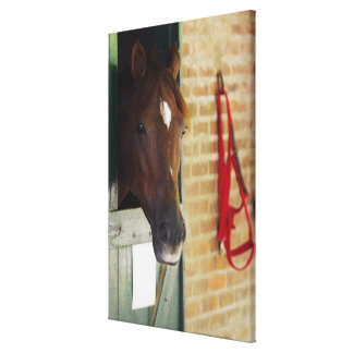 Close-up of a horse 2 canvas print