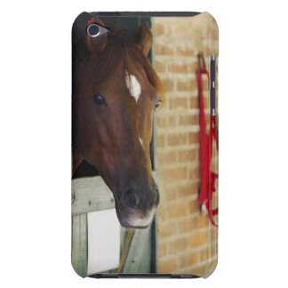 Close-up of a horse 3 iPod touch covers