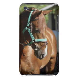 Close-up of a horse 4 iPod touch Case-Mate case