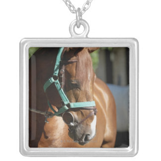 Close-up of a horse 4 silver plated necklace