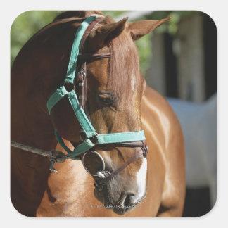 Close-up of a horse 4 square sticker