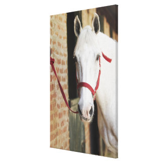 Close-up of a horse canvas print