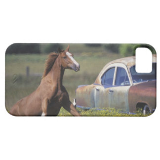 Close-up of a horse running near a car on a barely there iPhone 5 case