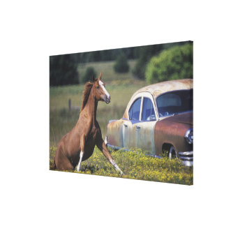 Close-up of a horse running near a car on a canvas print