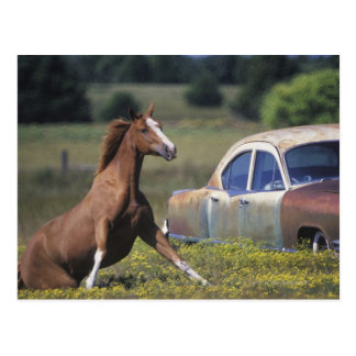 Close-up of a horse running near a car on a postcard