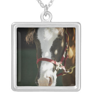 Close-up of a horse silver plated necklace
