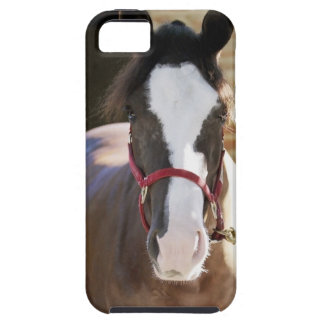 Close-up of a horse tied in a stable iPhone 5 case