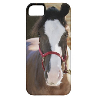 Close-up of a horse tied in a stable iPhone 5 covers