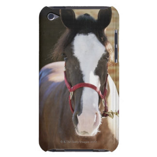 Close-up of a horse tied in a stable iPod Case-Mate case