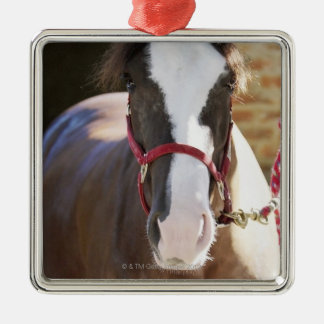 Close-up of a horse tied in a stable Silver-Colored square decoration