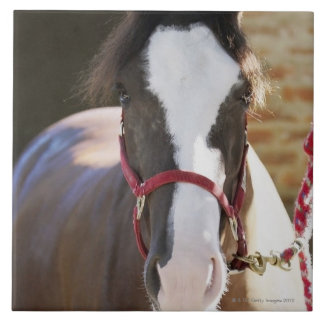 Close-up of a horse tied in a stable tile