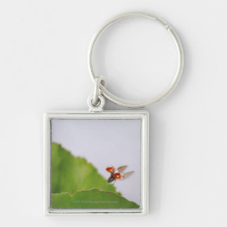 Close-up of a ladybug flying over a leaf key ring