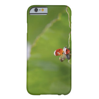 Close-up of a ladybug on a leaf barely there iPhone 6 case
