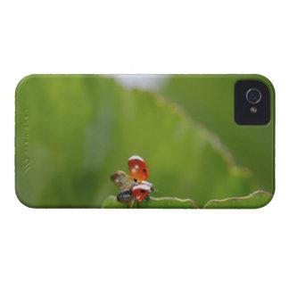 Close-up of a ladybug on a leaf iPhone 4 case