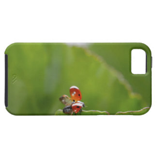 Close-up of a ladybug on a leaf iPhone 5 covers