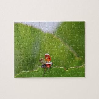 Close-up of a ladybug on a leaf jigsaw puzzle