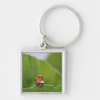 Close-up of a ladybug on a leaf key ring