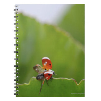 Close-up of a ladybug on a leaf notebook