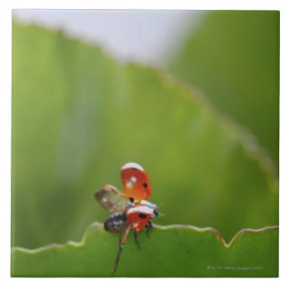 Close-up of a ladybug on a leaf tile