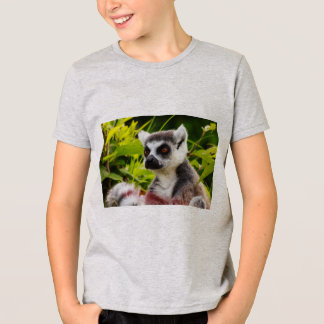 close-up of a lemur on  american appareal t-shirt