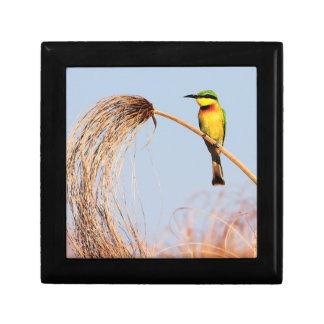 Close-up of a little bee-eater bird gift box