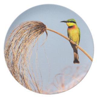 Close-up of a little bee-eater bird plate