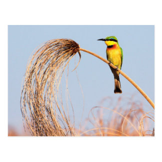 Close-up of a little bee-eater bird postcard