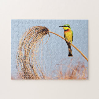 Close-up of a little bee-eater bird puzzles