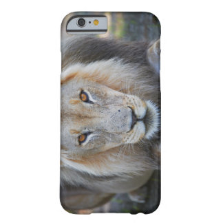 close up of a  male lion, Panthera leo, Barely There iPhone 6 Case