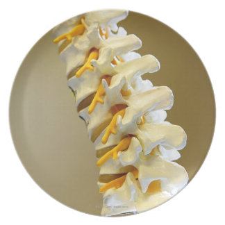 Close-up of a medical model of vertebrae of the dinner plates