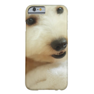 Close-up of a miniature poodle 2 barely there iPhone 6 case