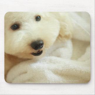 Close-up of a miniature poodle 2 mouse mat