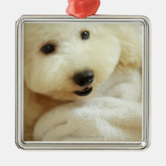 Close-up of a miniature poodle 2 Silver-Colored square decoration