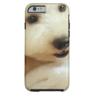 Close-up of a miniature poodle 2 tough iPhone 6 case