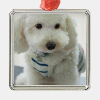 Close-up of a miniature poodle christmas ornament